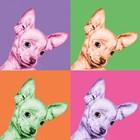 Sweet Chihuahua Pop by Jon Bertelli art print