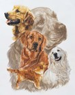 Golden Retriever with Ghost Image by Barbara Keith art print