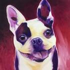 Boston Terrier - Abigail by DawgArt art print