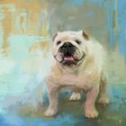 White English Bulldog by Jai Johnson art print