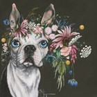 Boston Terrier by Hollihocks Art art print
