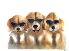 Dogs in Glasses by Olga Shefranov art print