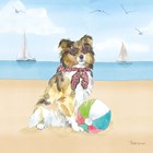 Summer Paws V No Words by Beth Grove art print