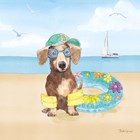 Summer Paws III No Words by Beth Grove art print