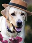Dapper Dog by Susan Bryant art print