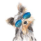 Yorkie with Shades by Patricia Pinto art print