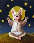 Puppy Dreams by Lucia Heffernan art print
