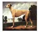 Greyhound in a Parkland Landscape by Christine Merrill art print