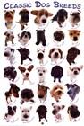 Dog Breeds by Yoneo Morita art print