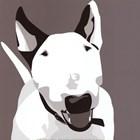 Bull Terrier by Emily Burrowes art print