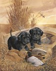 Black Lab Pups by Ruane Manning art print
