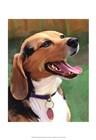 Beagle-Beagle by Robert McClintock art print