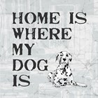 Home Is Where My Dog Is by Veruca Salt art print
