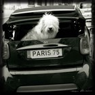 Paris Dog I by Marc Olivier art print