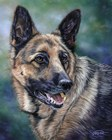 German Shepard by Cory Carlson art print