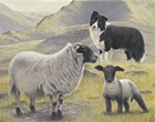 Tending the Sheep by John Silver art print
