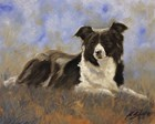 Collie Resting by John Silver art print