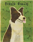 Border Collie by John W. Golden art print