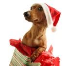 Santa's Puppy Gift by DesignPics art print