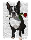 Boston Terrier with Rose in Mouth by Fab Funky art print