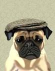 Pug in Flat Cap by Fab Funky art print