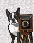 Boston Terrier Photographer by Fab Funky art print