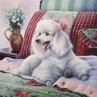 White Poodle by Jenny Newland art print