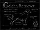Blueprint Golden Retriever by Ethan Harper art print