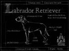 Blueprint Labrador Retriever by Ethan Harper art print