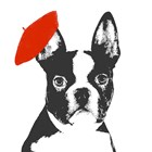 Red Beret Dog by SD Graphics Studio art print