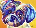 Shih Tzu - Lacey by DawgArt art print