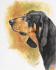 Black and Tan CoonHound by Barbara Keith art print