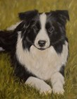 Collie Resting 2 by John Silver art print