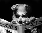 All About Cats by Bettmann-Corbis art print