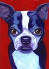 Boston Terrier by Corina St. Martin art print