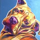 Pit Bull - Dozer by DawgArt art print