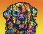 Newfie by Dean Russo art print