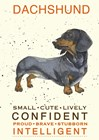 Dachshund by Michelle Campbell art print
