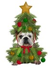 English Bulldog, Christmas Tree Costume by Fab Funky art print