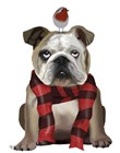 English Bulldog, Scarf and Robin by Fab Funky art print