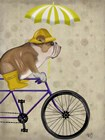 English Bulldog on Bicycle by Fab Funky art print