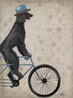 Poodle on Bicycle, Black by Fab Funky art print