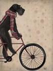 Schnauzer on Bicycle, Black by Fab Funky art print