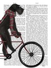 Schnauzer on Bicycle, Black by Fab Funky art print