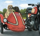 Born to be Wild Crop by James Wiens art print