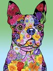 Flowers Boston Terrier by Tomoyo Pitcher art print