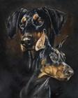 Doberman Pinscher by Barbara Keith art print