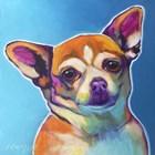 Chihuahua - Starr by DawgArt art print