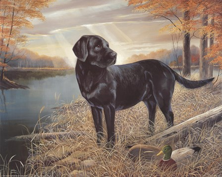 Black Lab with Decoys by Ruane Manning art print